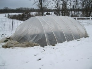 hoop house cleaned up after the storm